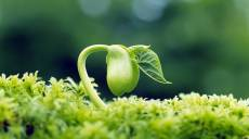 Môi giới bất động sản: hãy là người gieo hạt Dễ thương, Bền bỉ, Kiên trì